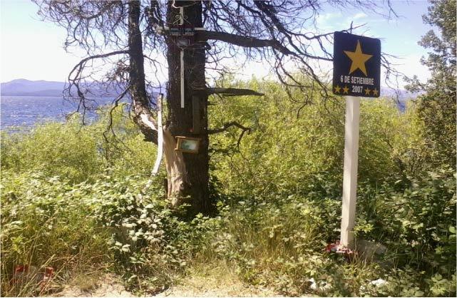 Estrella amarilla en Bariloche - Foto de María de las Nieves MOLDES